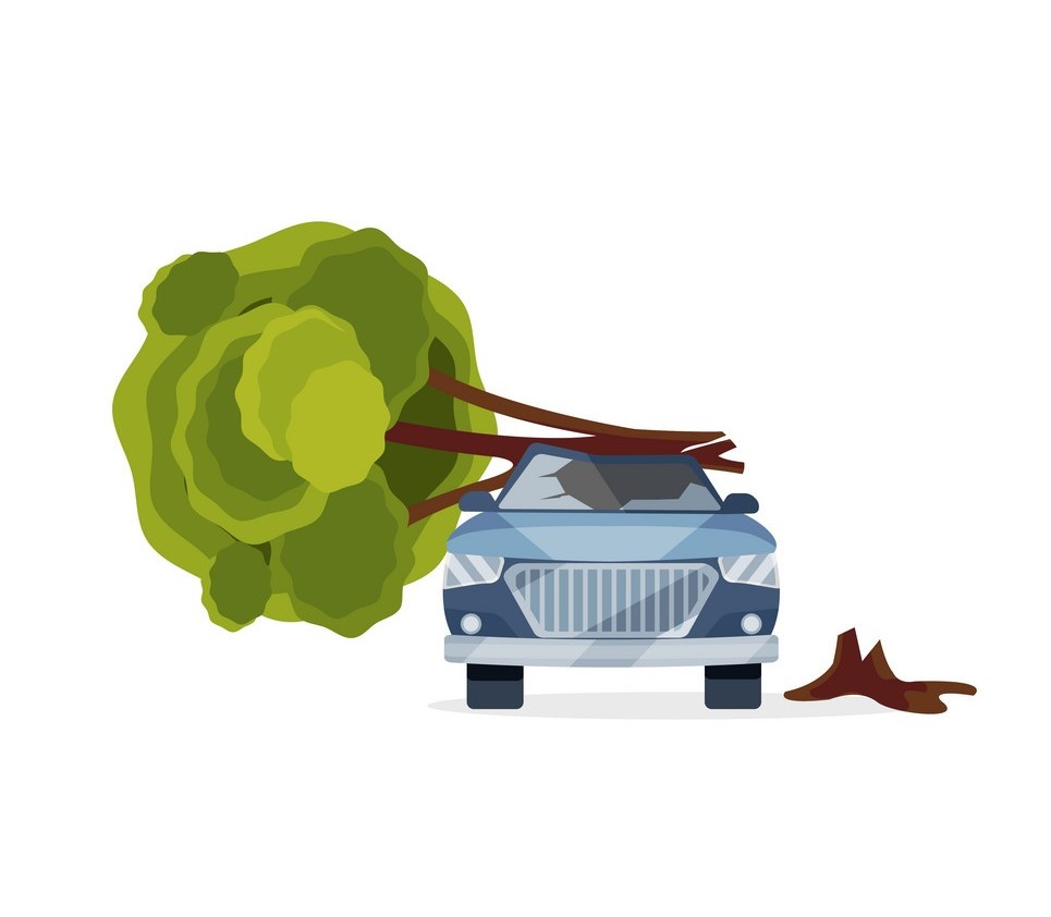 What if a tree falls on your car?